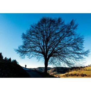 RC051 Wanderer am Schattenbaum